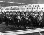 Horse racing at Hollywood Park