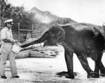 Elephant's mere 1500 pounds may reach 4 tons at Park Zoo