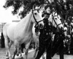 Photo of firehouse horses