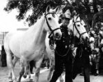 Firemen with horses in the Blessing of the Animals procession