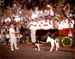 Man with garlanded cow