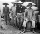 Chinese workers replace the Indians as the chief manual labor in South California agriculture,...