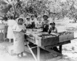Mexican agricultural workers pitting apricots