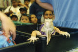 Iguana at the Cypress Park Branch Library