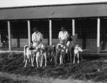 Training Borzoi dogs, view 3