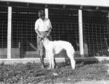 Training Borzoi dogs, view 2