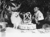 A dog's birthday, view 8
