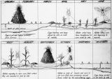 Corn root aphis diagram