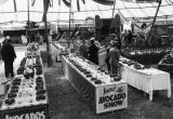 Avocado show, Whittier 1933, view 2