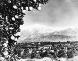 Orange groves and Mt. Baldy