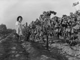 Female grape picker