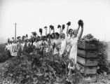 Burbank grape pickers, view 13
