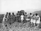 Burbank grape pickers, view 16