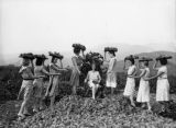 Burbank grape pickers, view 15