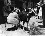 Woman milking goat