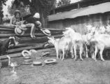 Women feeding hats to goats