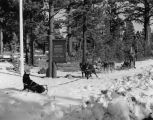 Dog sled at Mammoth Ranger Station