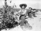 Women working in Gausti vineyard, view 8