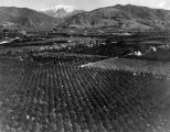 Aerial view of Glendora orchards