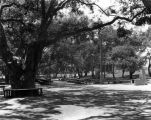 Picnic area at Garfield Park, South Pasadena
