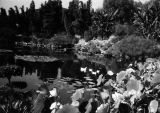 Kellog Ranch pond and garden, view 1