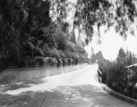 Driveway to the Bernheimer Estate, Hollywood