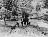 Ranger on horseback with dogs at Big Pines