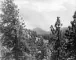 Big Pines, view 26
