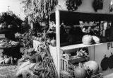 """Valley Talk"" Pumpkins for sale"