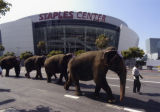 Elephants on a walk near Staples Center
