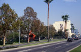 Los Angeles County Museum of Art and La Brea Tar Pits