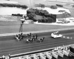 Harness horses set a fast racing pace