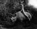 Weissmuller on a rhinoceros