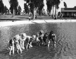 Recreation Park, children wading in the casting club pool
