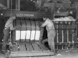 Men working in a warehouse cotton gin