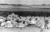 Peace marchers camp out at the Mojave Desert