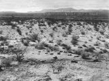 Desert where Ivemae Cerney's body was dumped