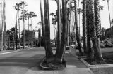 Palm-tree lined street, Tarzana
