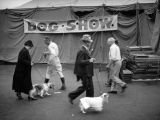 Dog show at the Los Angeles County Fair