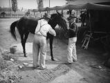 Two men examine a horse at Los Angeles County Fair