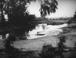 Lake at the La Brea Tar Pits