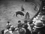 The real raging bull, El Toreo de Tijuana