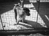 Baboon at Zoopark