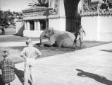Children, an Elephant and the entrance to Zoopark