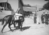 Horse and jockey number five, Santa Anita Racetrack