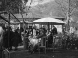 Tearoom and mountains, Wistaria Vine, Sierra Madre