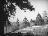 Big Pines Recreation Camp, snow patches