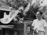 Otto Winkelmann training homing pigeons