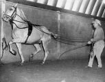"""Ben Hur"" horse trained"