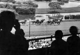 Hollywood Park, charity goes to the races